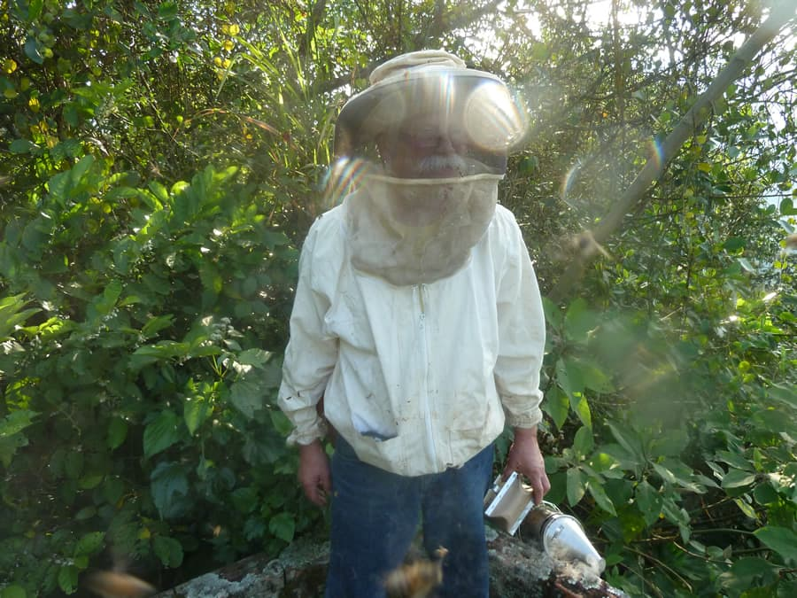 Volunteer in Colombia Beekeeping